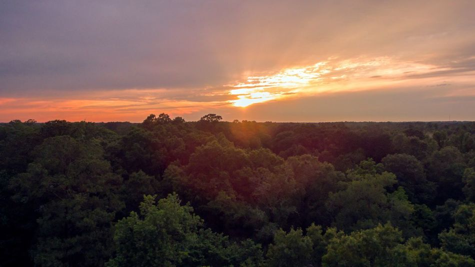 Sunset Louisiana