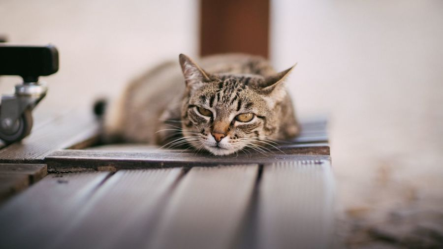 Close-up of cat relaxing on bench