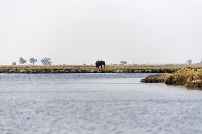View of a lake with an elephant
