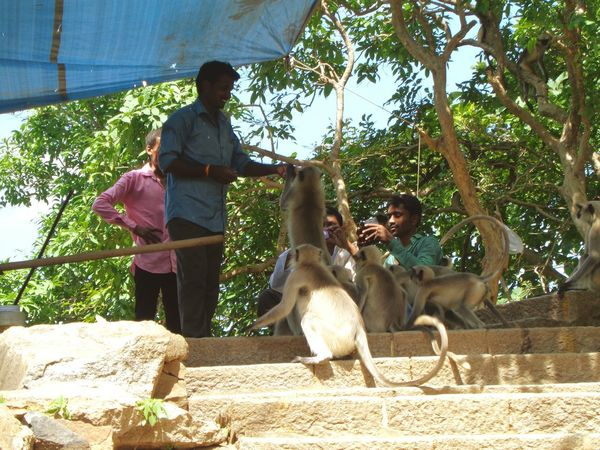 A man giving food to monkey family , bcz first monkey steal his food and beg than scary man give them food to bring begs and really i seen that monkey was given Chance Encounters One Animal Dog Tree Animal Themes Pets Mammal Full Length Domestic Animals Animal Pet Owner Outdoors Friendship Day Monkey People Men Food Adult