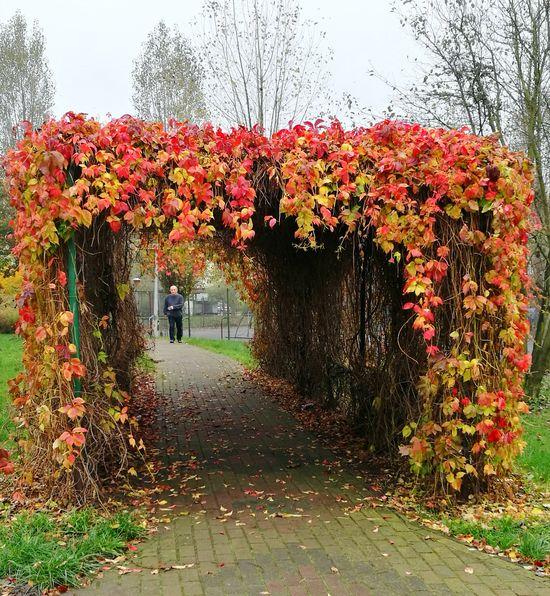 Autumn Nature Day Flower Plant Beauty In Nature Walk Torun, Poland Huawei P9 Leica