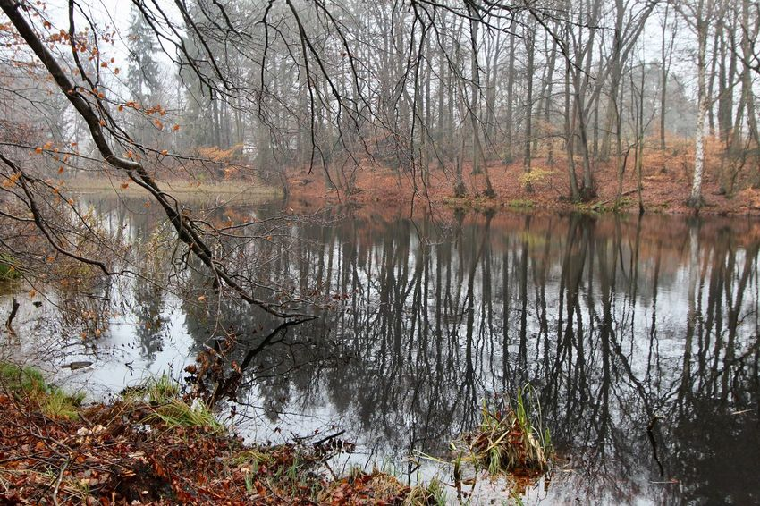 A December Sunday in the woods ... Autumn Bare Tree Beauty In Nature Forest Landscape Nature No People Outdoors Scenics Tranquil Scene Tranquility Tree Water
