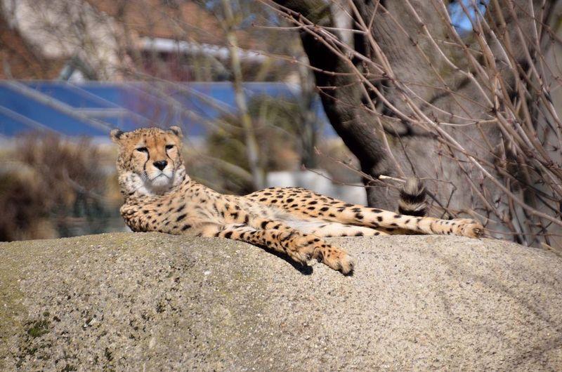 Zoo Basel Chill