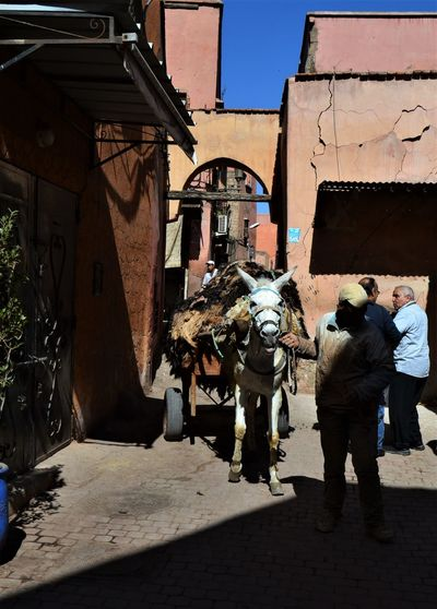 Donkey attached to a heavy cart of animal skins being coaxed through the entrance to the tanneries, Marrakesh, Morocco. Building Exterior Architecture City Built Structure Shadow Sunlight Men Building Nature Street Real People Day Group Of People People Outdoors Walking Full Length Residential District Old Tanneries Donkey Animal Skin The Art Of Street Photography