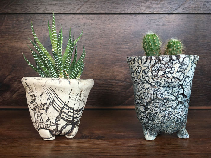 two cactus in the pot on the wooden table Background Beautiful Cactus Closeup Decoration Design Flora Fresh Garden Green Growth Interior Natural Nature Plant Pot Small Table Wooden Potted Plant Wood - Material Indoors  No People Green Color Day Succulent Plant Gardening Houseplant