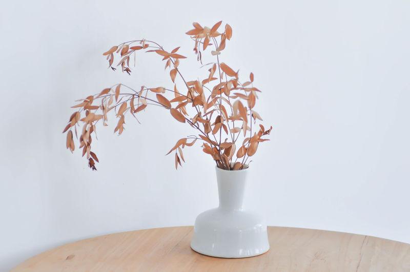 vase or dried