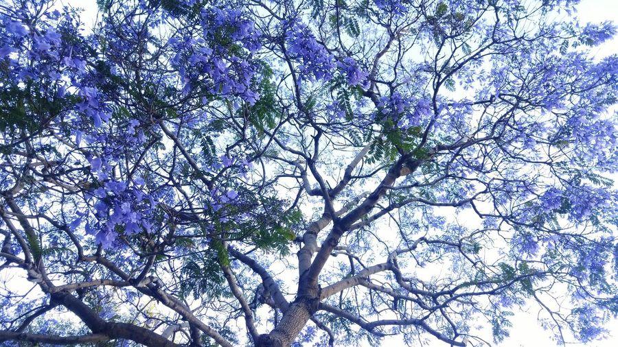Sfflowerpower Streetgardner Purpme Sfflowerpower. Purple ♥ Purple Flower Taking Photos Relaxing San Francisco Treethugger Treeonfire hanging out Showcasejune