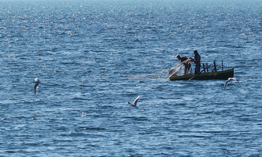 Animals In The Wild Bird Day Men Nature People Real People Sea Sea Life Water Waterfront