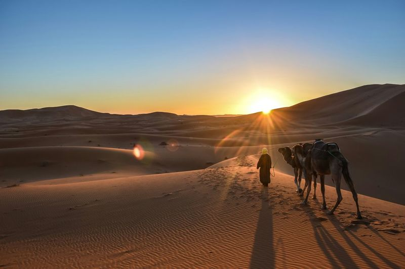 High angle view of man walking with camels in desert at merzouga