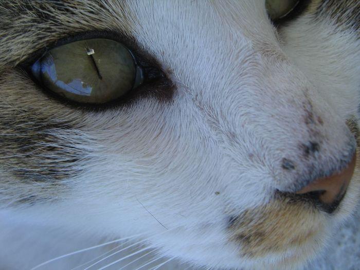 Animal Body Part Animal Eye Animal Head  Cat Close-up Detail Domestic Animals Domestic Cat Feline Pets Portrait Snout Whisker Fine Art Photography Fine Art No People EyeEm Best Shots Frekles Lost In Thought...