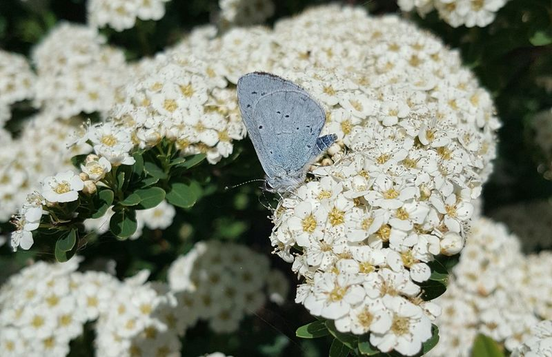 EyeEmNewHere Flower Flower Head Butterfly - Insect Insect White Color Close-up Plant In Bloom