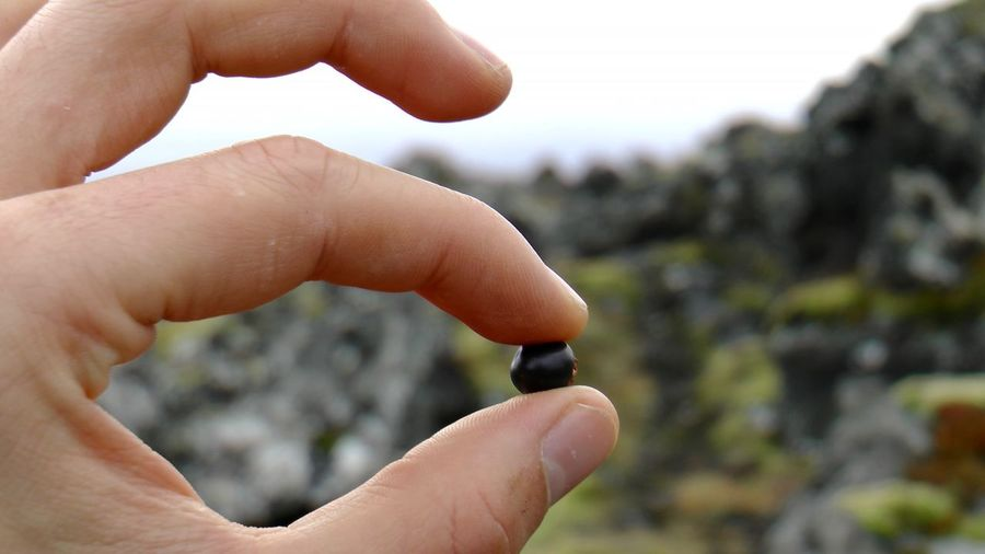 Berry Blueberry Close-up CrowberryJuice Day Focus On Foreground Holding Human Body Part Human Finger Human Hand Iceland Moss Nature Outdoors