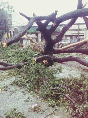 Calamity Typhoonglenda Ph