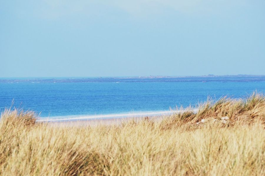 Beach Beauty In Nature Blue Clear Sky Day Grass Growth Horizon Over Water Jersey Channel Island UK Marram Grass Nature No People Outdoors Sand Sand Dune Scenics Sea Sky Timothy Grass Tranquil Scene Tranquility Water