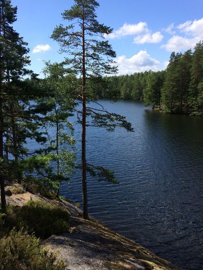 Finland Beauty In Nature Cloud - Sky Day Forest Grass Growth Lake Landscape Nature No People Non-urban Scene Outdoors River Scenics Sky Tranquil Scene Tranquility Travel Destinations Tree Water Woods