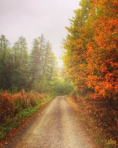 Lonely road Autumn EyeEm Nature Lover Trees Lon