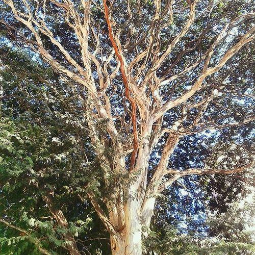 As raízes são o alicerce para que os galhos venham a dar folhas, podemos levar isso para nossa vida também.. 🌳🌿🍃 Vivanatureza Arvore Tree Brazil Relaxing Peace VSCO Vscocam Photograph Nature SP Mobilephotography Picture Boanoite
