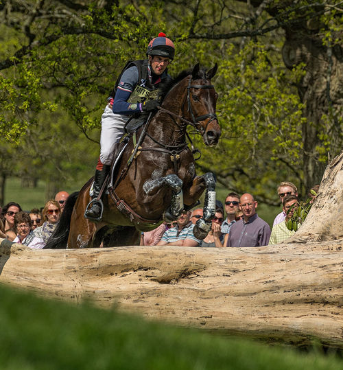 Keeping focused Bay Horse Brightly Coloured Competition Competitive Cross Country Day Horse Jumping Outdoors Spectators Three Day Eventing The Great Outdoors - 2016 EyeEm Awards