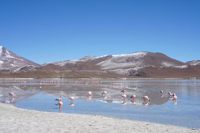 Bolivia Cañapa Lake Mountain View Reflection Blue Sky Flamingos Laguna Charcota Laguna Hedionda Viajeabolivia