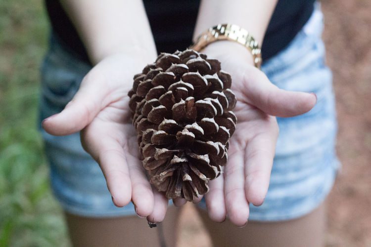 Adult Adults Only Close-up Day Focus On Foreground Food Food And Drink Freshness Holding Human Body Part Human Hand One Person One Woman Only Only Women Outdoors People Pine Cone Real People