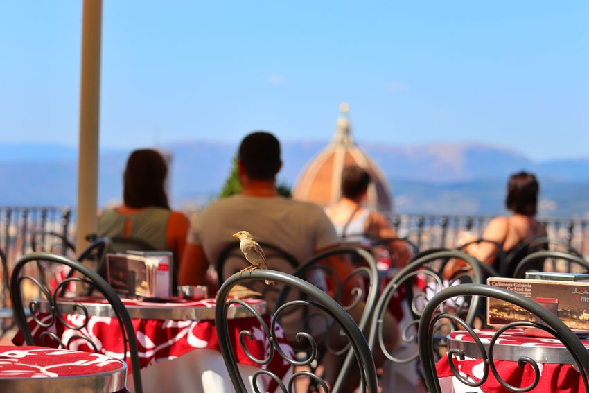 Una terrazza sul Duomo Photo Pic Photography Capture Moment Vacation Visiting Traveling Color Beautiful Eos77D Canon MR7 Architecture Composition Photos Travel Firenze Duomo Nature Skyline Rear View Adult Outdoors Day Vacations Red City Cityscape Sky