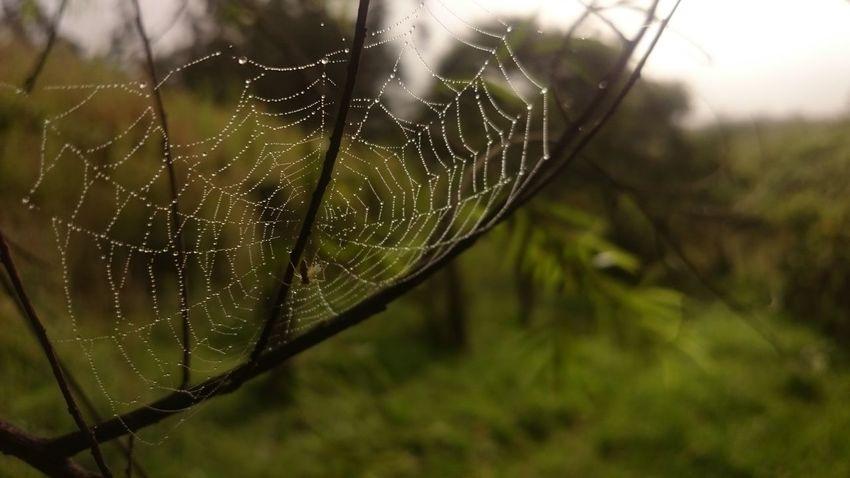 Gotas De Lluvia Gotas Raindrops Spiderweb Telaraña