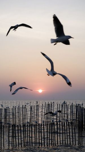Seagulls flying over sea during sunset