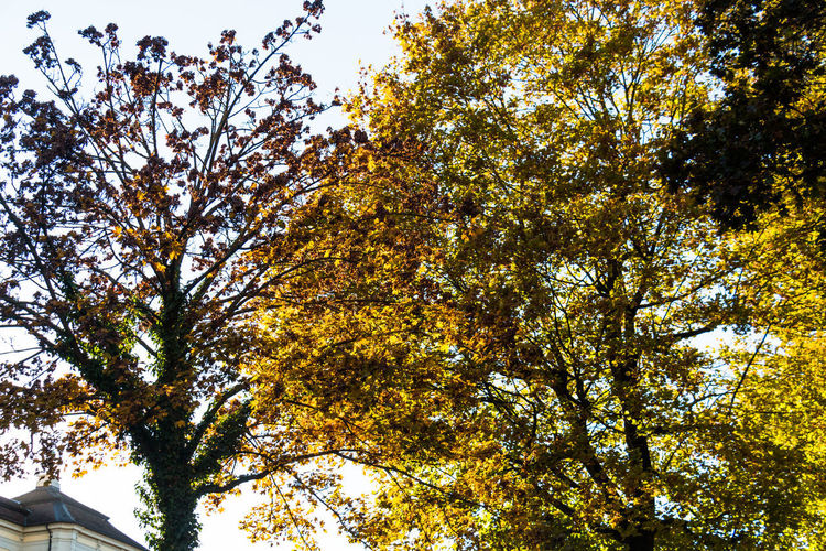 Autumn Autumn Colors Autumn colors Ludwigsburg Nature Leafs Autumn Leaves Sunshine Outdoors Plant No People Growth