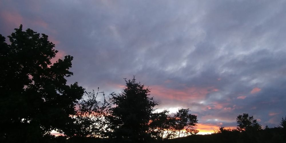 Tree Sky Cloud