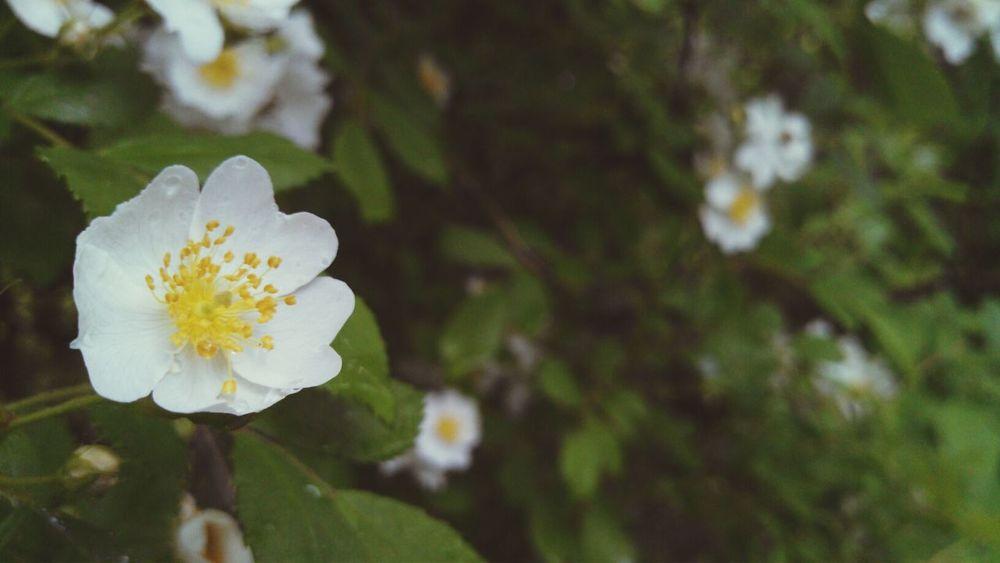 After The Rain Flowers Up Close Springtime <3