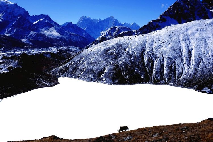 When one photo is worth a weeks hiking! Gokyo Lake Himalayas Trekking Wonderlust 5000mtsAboveSea Yak Mountain View First Eyeem Photo