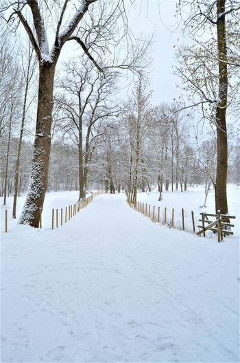 Snow Cold Temperature Winter Tree Plant Bare Tree White Color Tranquility Covering No People Nature The Way Forward Scenics - Nature Field Direction Tranquil Scene Branch Beauty In Nature Day Diminishing Perspective Outdoors Treelined Snowcapped Mountain
