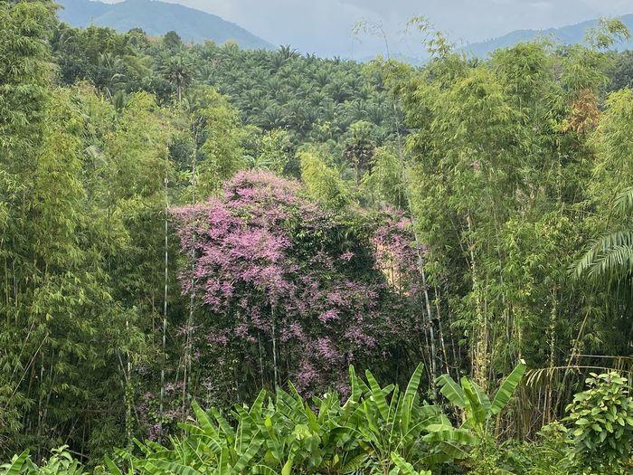Purple flowering plants on land in forest