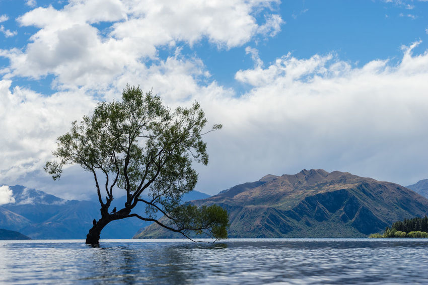 A lonley tree is silhouetted in a lake in the mountains. Beauty In Nature Blue Branch Calm Cloud Cloud - Sky Day Idyllic Majestic Mountain Mountain Range Nature Non-urban Scene Outdoors Remote Scenics Sea Sky Tourism Tranquil Scene Tranquility Tree Vacations Water Waterfront