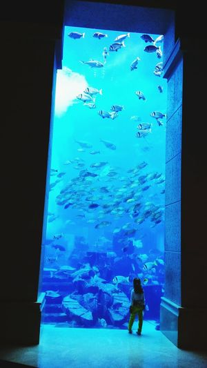 Dubai Jumairah The Palm Jumaira Relaxing Fishtank Atlantis The Palm