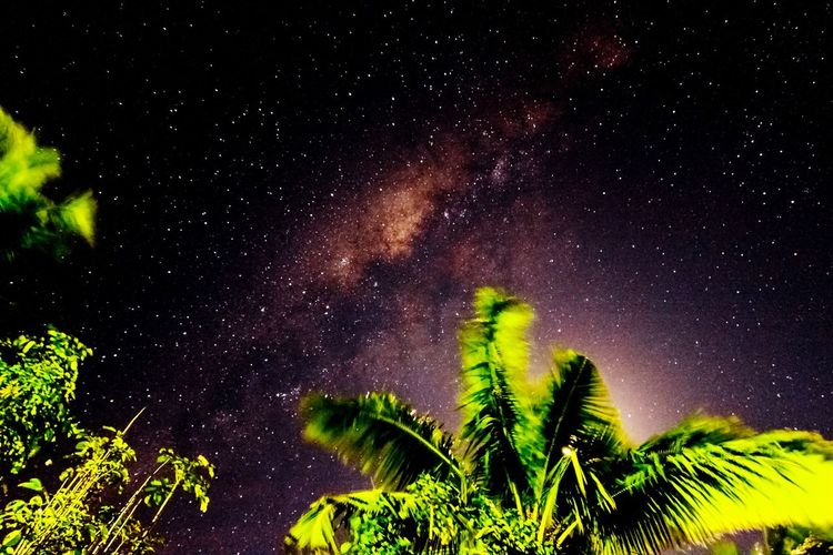 The Milky Way illuminates the night sky above Ha'Atafu, Tonga. Low Angle View Scenics Star - Space Beauty In Nature Star Field Astronomy Nature Sky Tranquil Scene Night Tranquility Glowing Growth Galaxy Green Color Majestic Outdoors Space Stars Nature Clear Sky Star No People Astrophotography