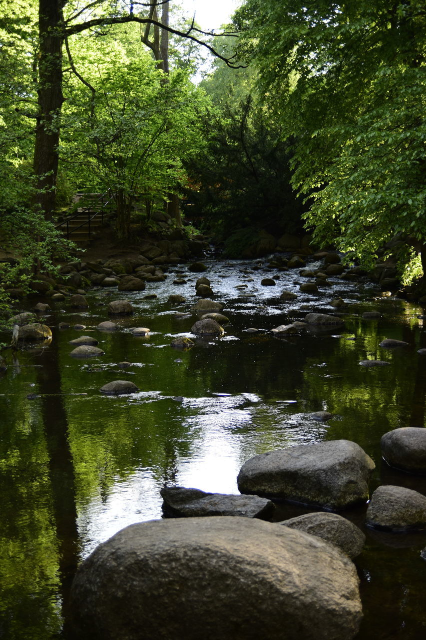 STREAM AMIDST ROCKS IN FOREST