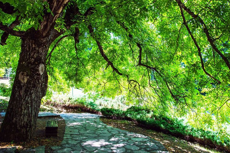 Bench Journey Reserve Tourism Plitvicka Jezera Nacionalni Park Plitvice Lakes National Park Plitvickajezera Plitvicelake Plitvickejezera Plitvicelakes Plitvice National Park Scenics Tranquility Croatia Travel Forest Beauty In Nature Day Green Color Relax Piece