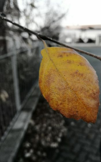 Nature Autumn Autumn Inspiration No People Focus On Foreground Autumn 2016 Season  Autumn Day Outdoors Plant BlackandColor Color Leaf Autumnleaf Yellow Natural Beauty Black Hanging