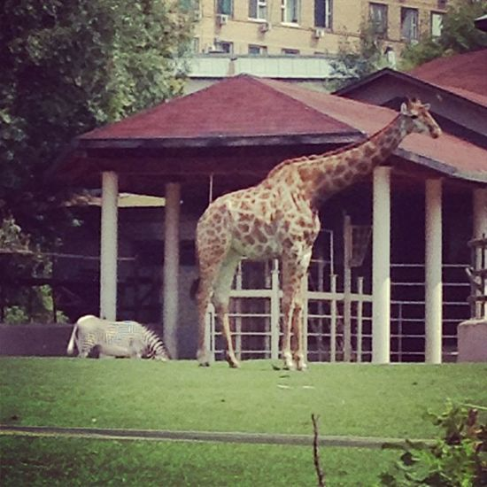 зоопарк МояМосква @martyn29 и @bondr16