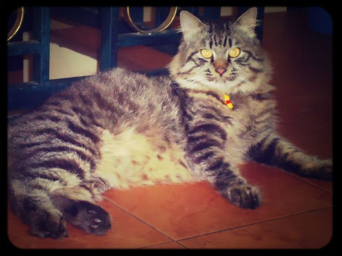 Thats my boy♥ #cat