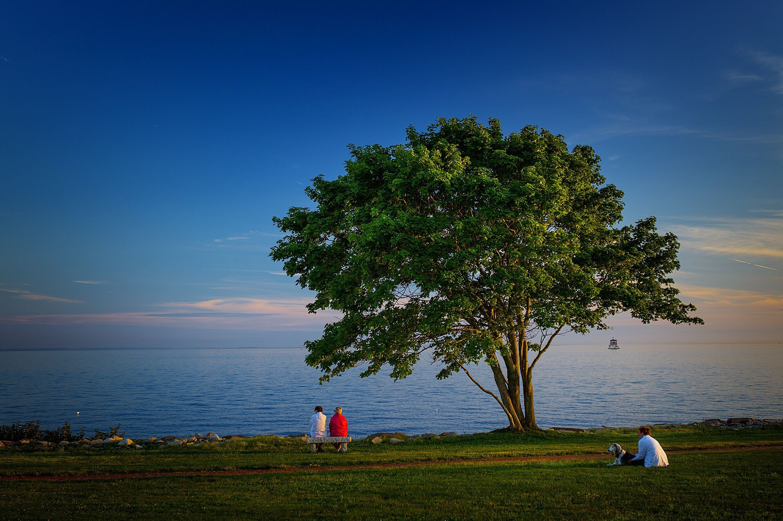 tranquility, tranquil scene, horizon over water, water, sea, scenics, sky, beauty in nature, tree, nature, beach, grass, idyllic, shore, blue, growth, calm, remote, outdoors