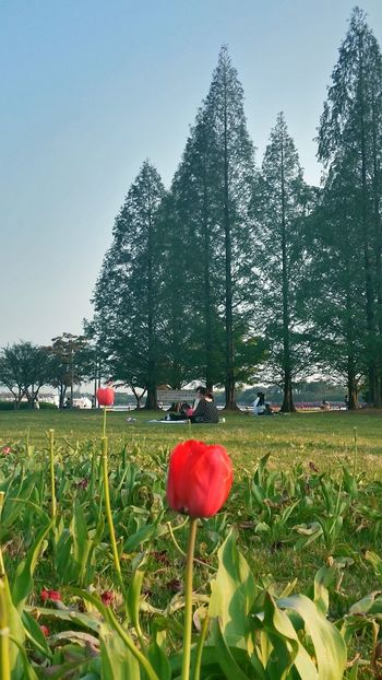 People Flower Porn Flowers Flower Collection Tulips🌷 Tulips EyeEm Nature Lover EyeEm Best Edits Take A Rest At The Park 일산호수공원