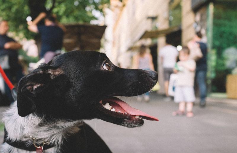 Close-up of black dog sitting on street