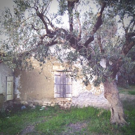 This old house Old Buildings Oldhouse Olive Tree Great Afternoon Photowalk Taking Photos