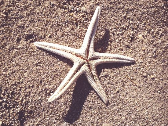 Beach Beachphotography Beach Life Starfish  Sand