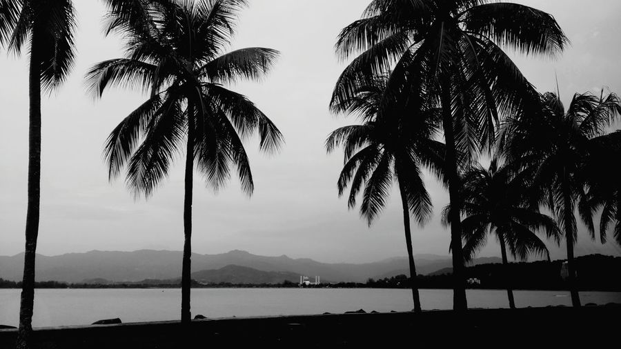 Can you see the mosque over there Ramadhanalmubarak Life Is A Beach Landscape Open Edit Eye4black&white  Eyem Best Shots - Black + White On The Road Sabah Kotakinabalu Palm Trees
