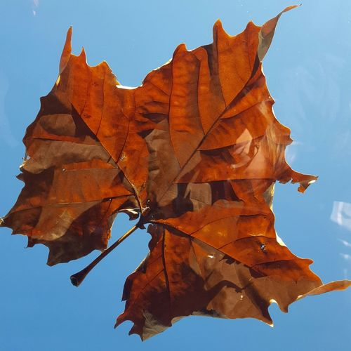 EyeEm Selects Leafs 🍃 Close-up Sunroof Sunroofsnaps EyeAmNewHere Giant Leaf Sky And Clouds Nature