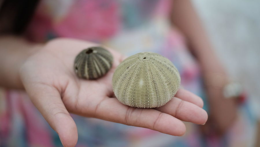 Midsection of woman holding sea urchins