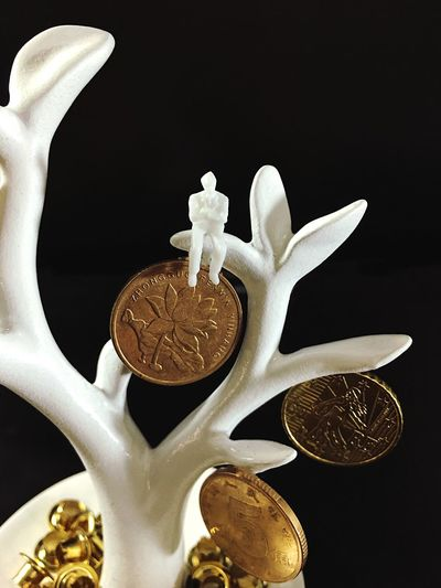 money tree Still Life Coin Human Representation Finance Wealth No People Savings Indoors  Richness Investment Business Financial Planning Stock Market Passive Income Financial Management Studio Shot Close-up Currency Gold Colored Black Background Freshness Money Tree